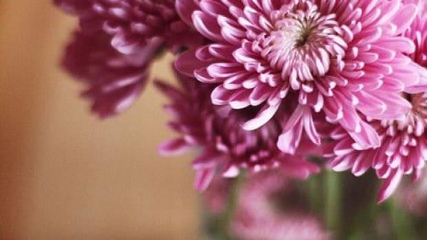 flowers-ccflcr-ginnerobot