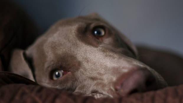 dog-ccflcr-deliriant1