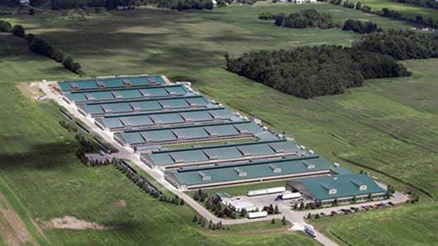 USDA Says It Won't Investigate Major Organic Farms For Alleged Animal Confinement Violations