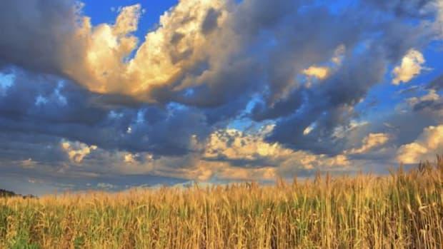 wheatfield-ccflcr-TheKnowlesGallery1