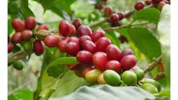 coffee1231