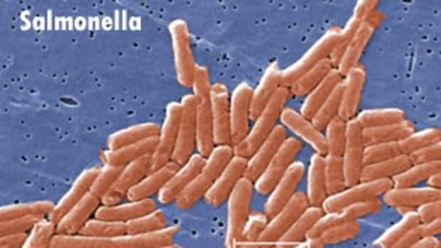 salmonella4