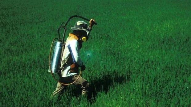 GMOspray-ccflcr-IRRIimages1