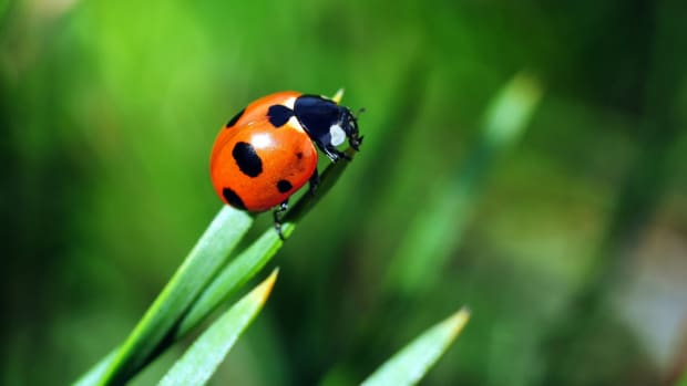 helpful insects in your garden