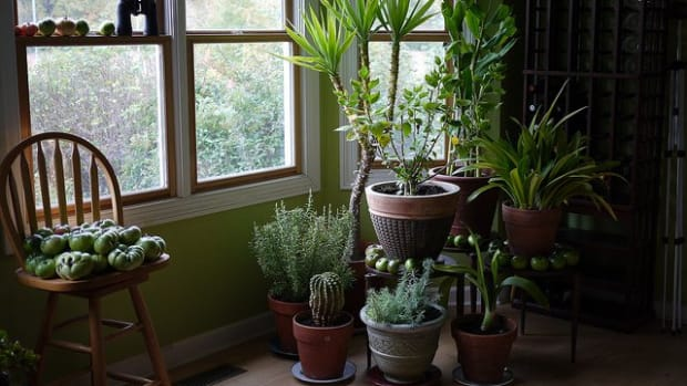 Fill your home with beautiful houseplants.