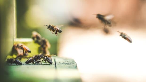 Neonicotinoid Pesticides Impair Bees' Social Behavior, New Study Shows