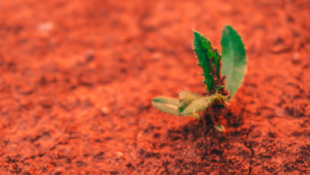 New Mission Will Grow Tomatoes on Mars