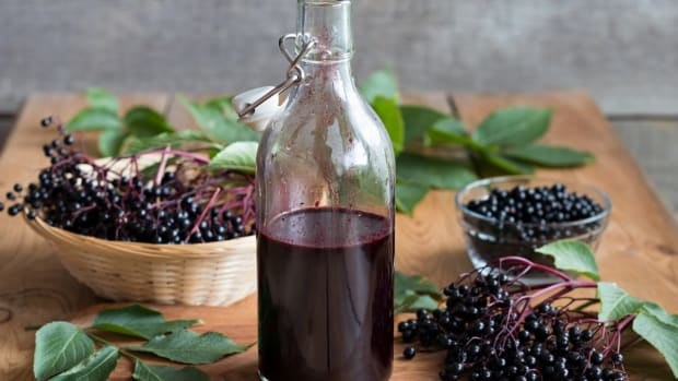 Elderberry Syrup Recipe for Cold and Flu Season