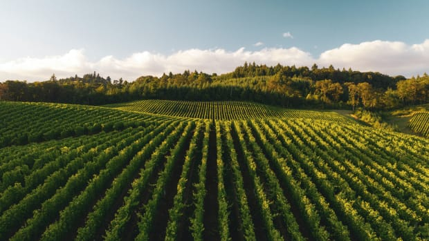 wide shot of Zenith Vineyards outside Salem, Oregon