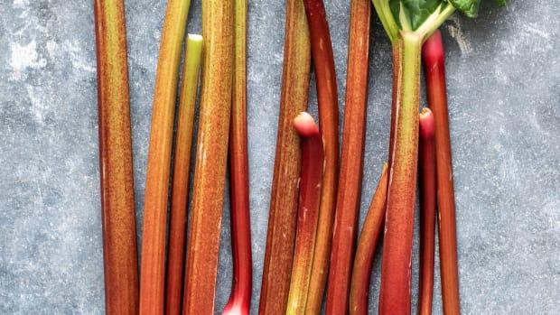 rhubarb-monika-grabkowska-7QKxN0uLgKI-unsplash