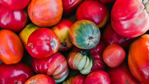 colorful different heirloom tomatoes