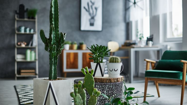 5 Super Low-Maintenance Indoor Succulents for Seriously Chill Room Goals