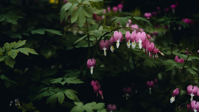 6 Perennial Plants to Grow in Poor Soil