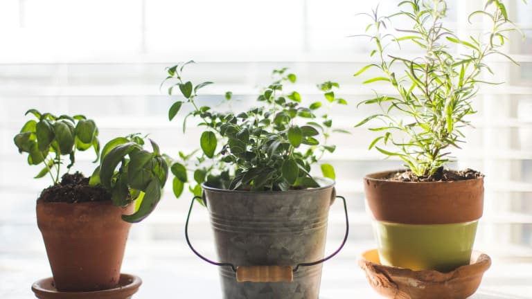 7 Easiest Herbs to Grow in Your Apartment Garden With Expert Advice From Pros
