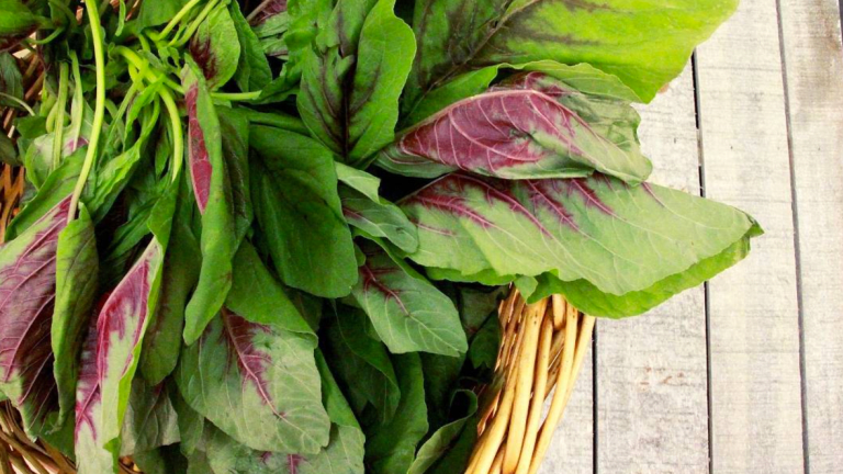 7 Reasons Amaranth Greens are the New Kale
