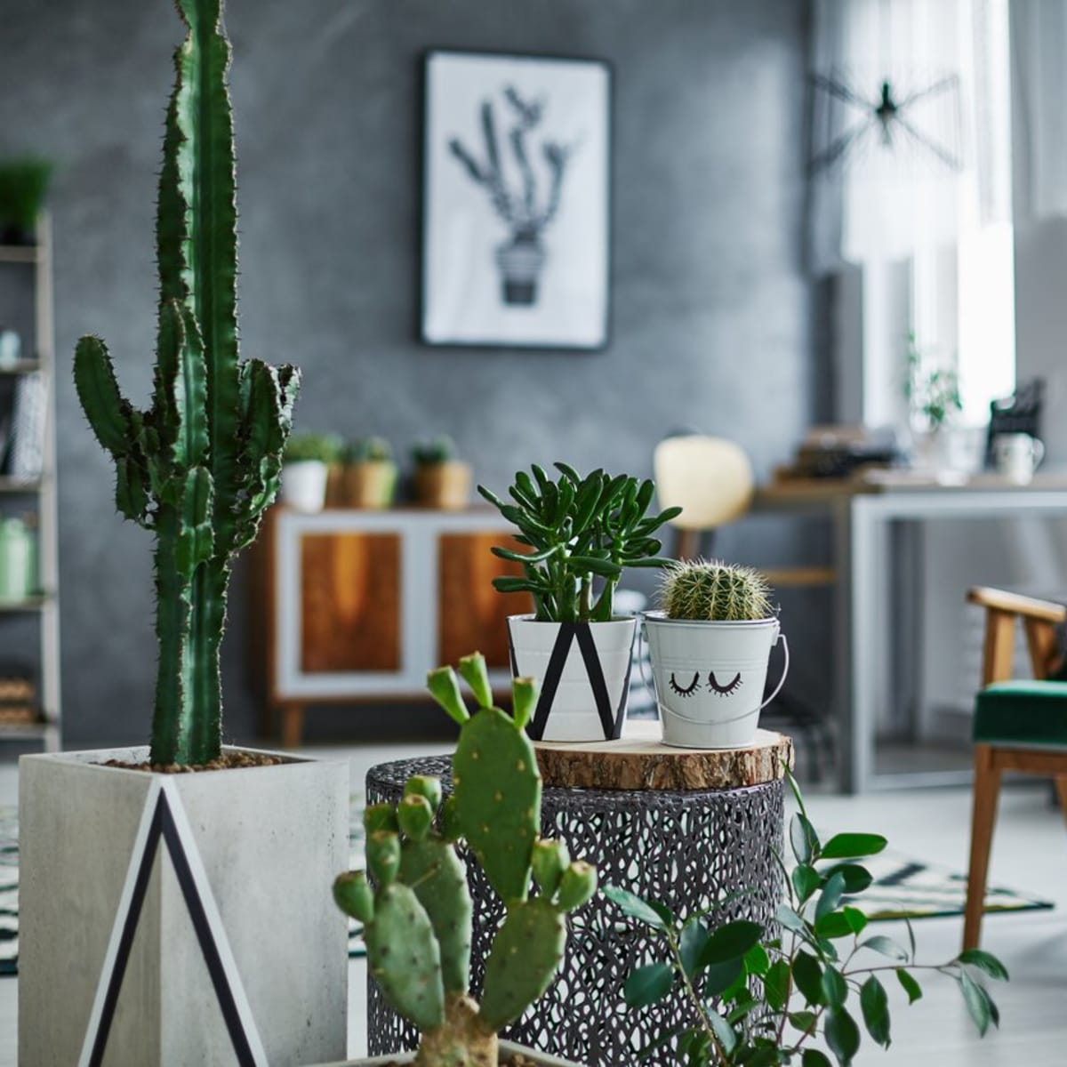 5 Super Low Maintenance Indoor Succulents For Your Chill Room Goals Organic Authority