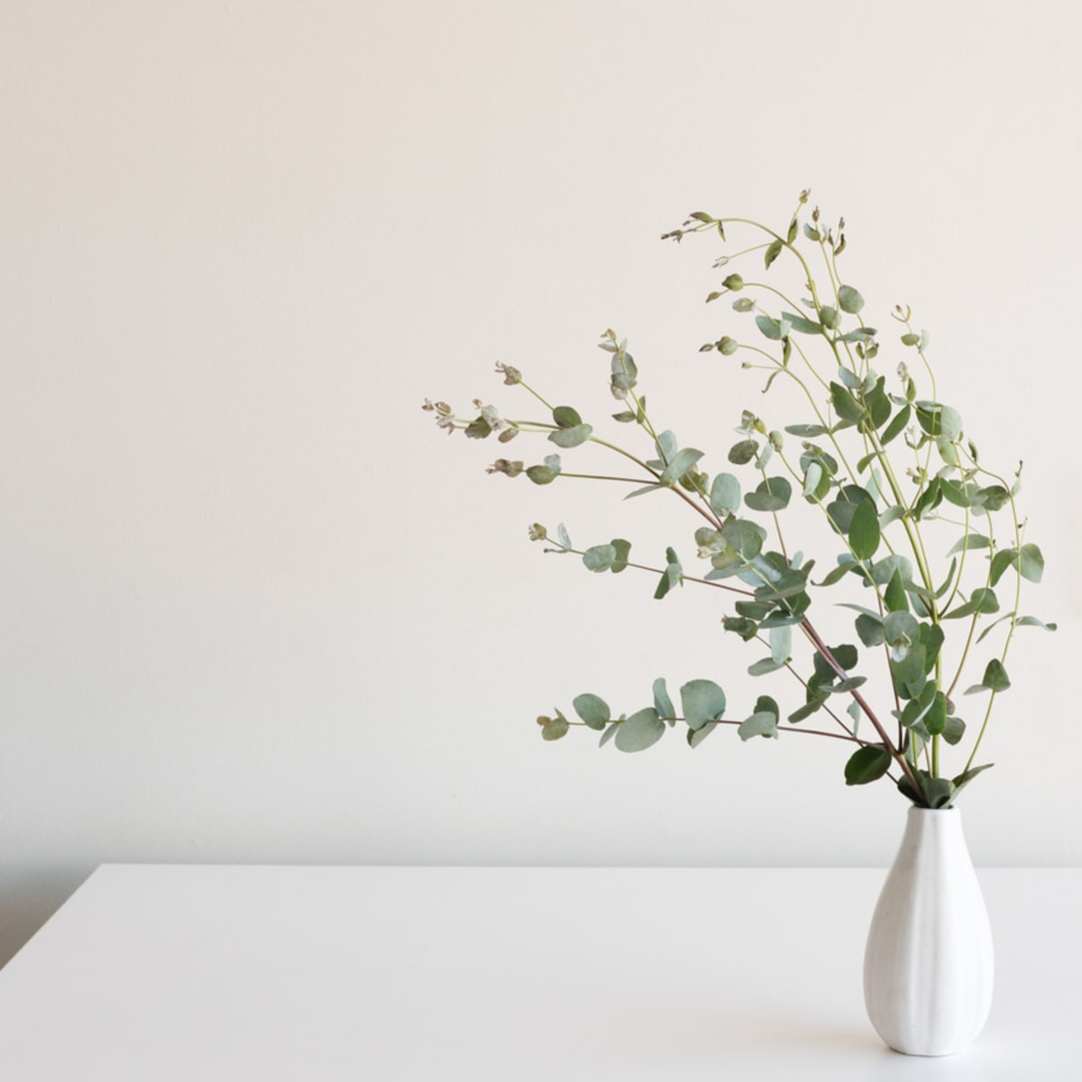 5 Eucalyptus Decorating Ideas For Your Healthy Home Organic Authority
