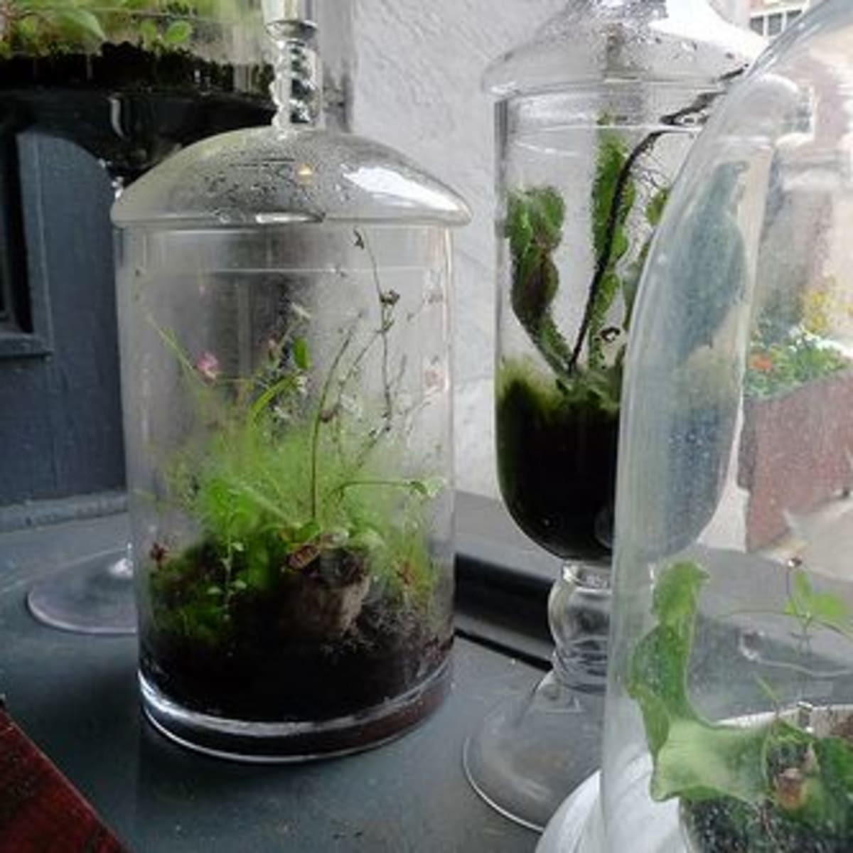 From Old Jar To Lush Microcosm How To Make A Terrarium Organic Authority
