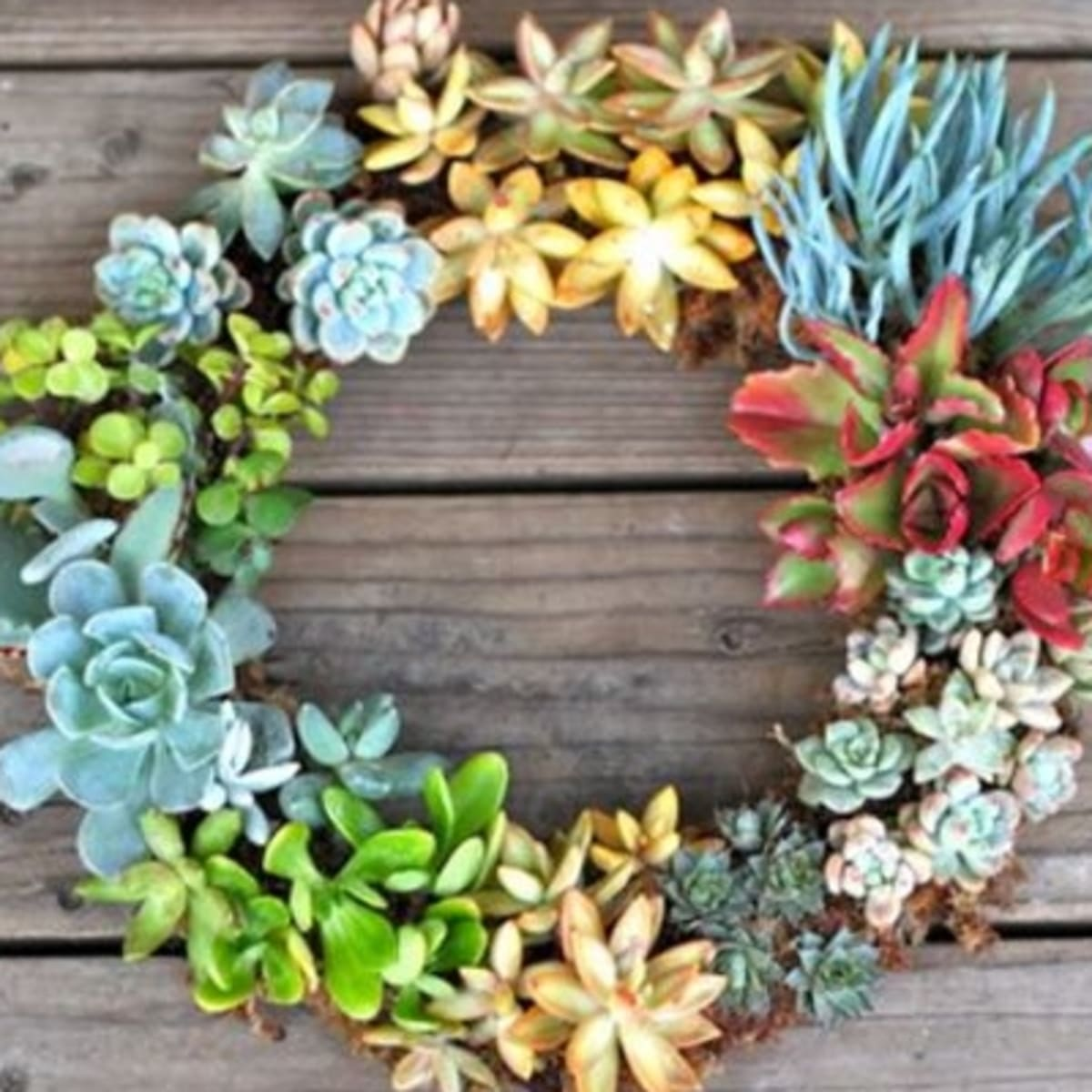 Garden Trend We Love Make Living Wall Art With Succulents Organic Authority