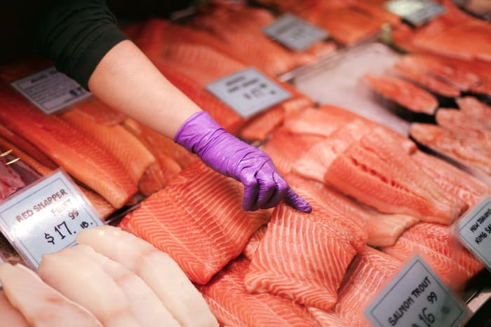 Downstream Environmental Risks the Latest GMO Salmon Setback