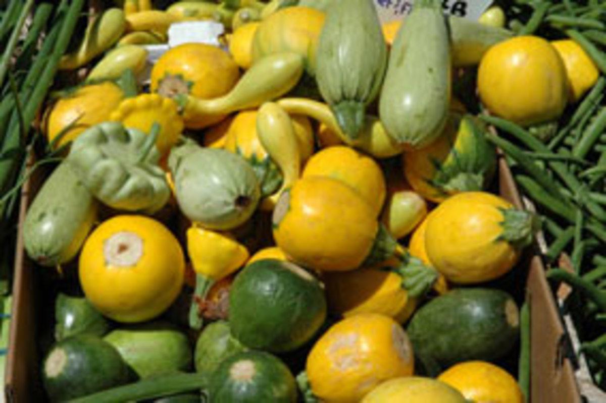 organic-summer-squash1