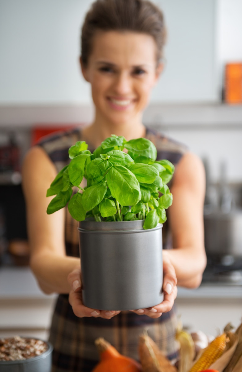 How to Grow Basil From Seedlings to Salad