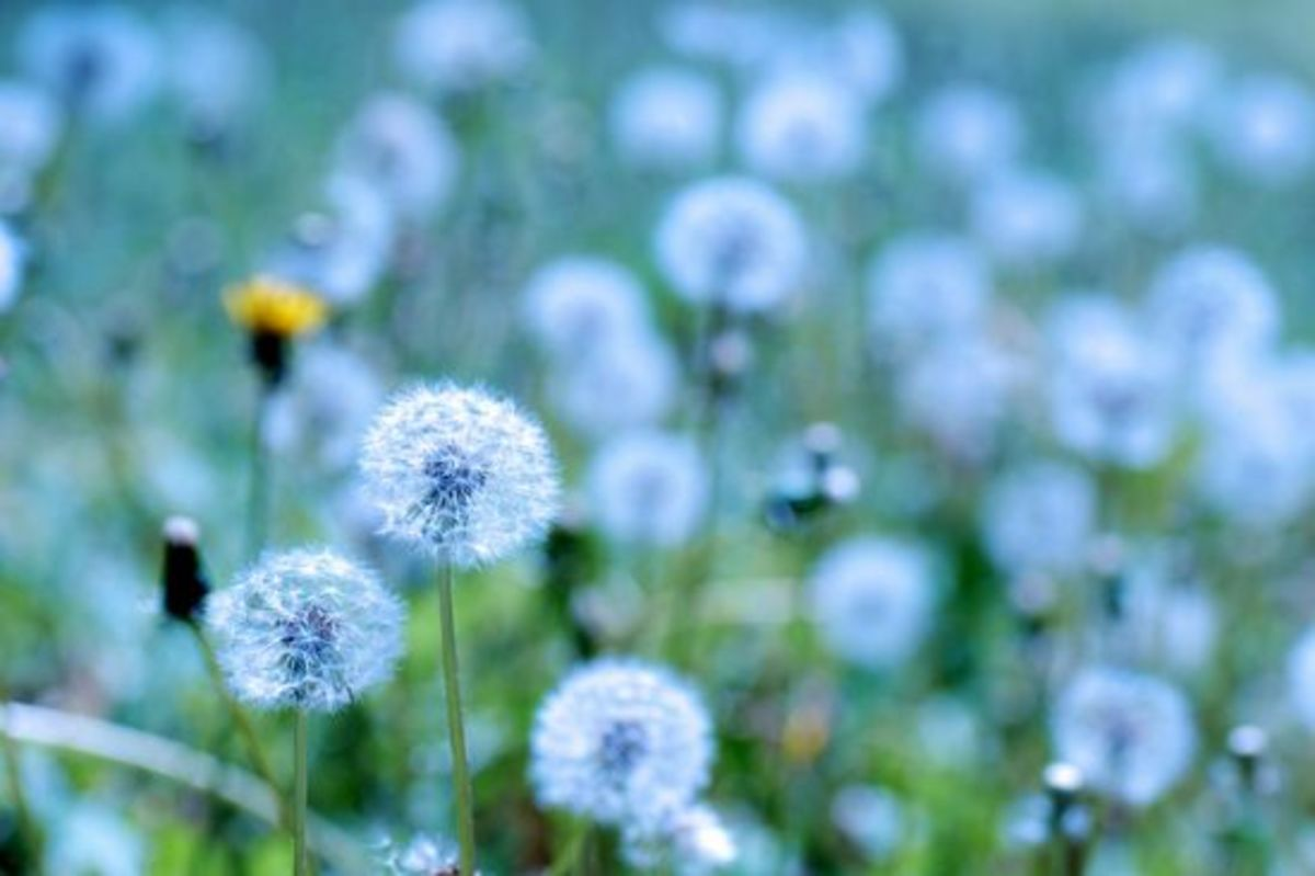 Try These 7 Essential Oils For Seasonal Allergy Relief