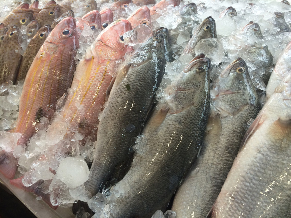 Mercury levels in fish more than double what labels say for How much mercury is in fish