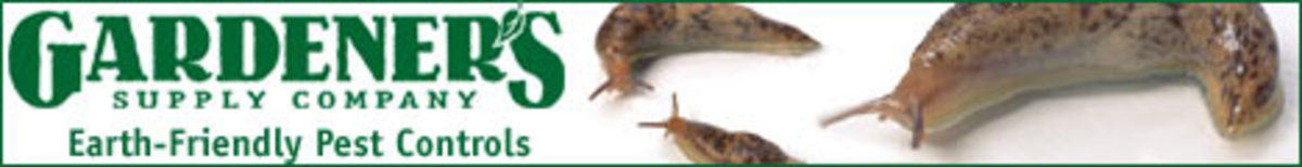 Spring - Slugs - 7