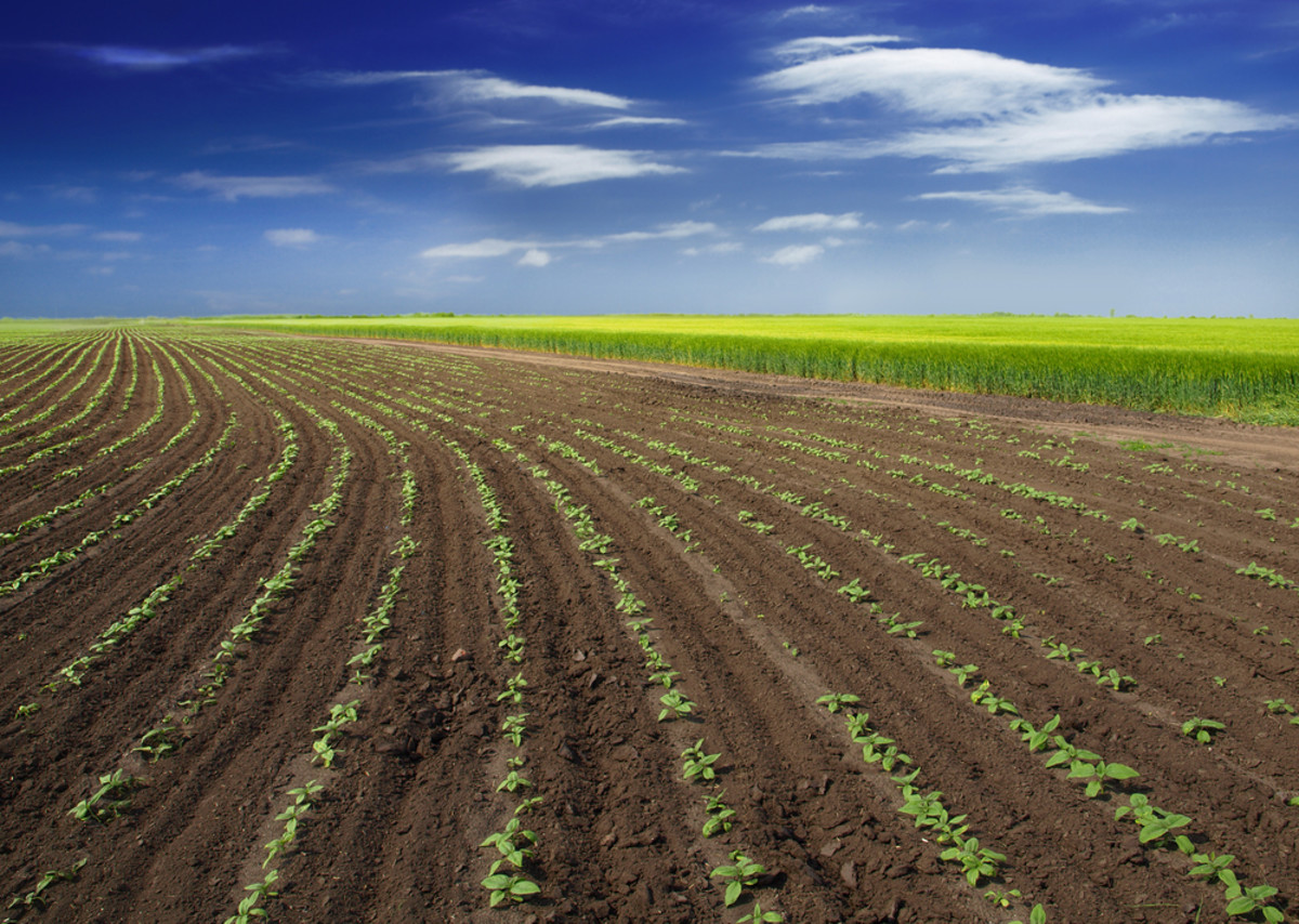 Research papers on organic agriculture