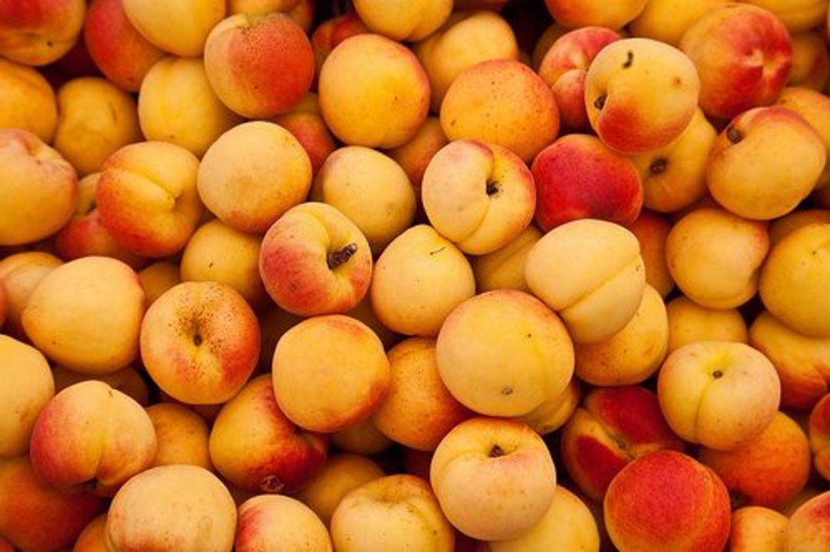 apricots-ccflcr-juan-antonio-capo