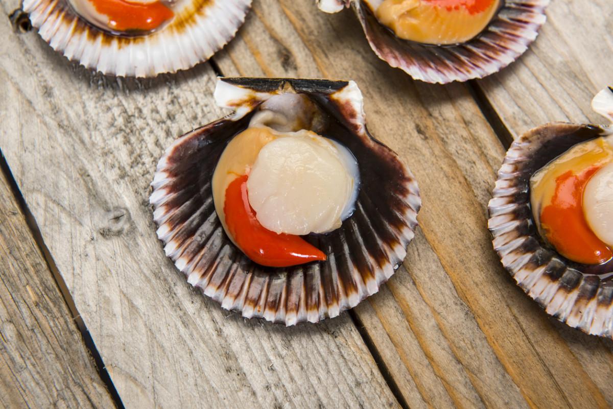 fair trade scallops