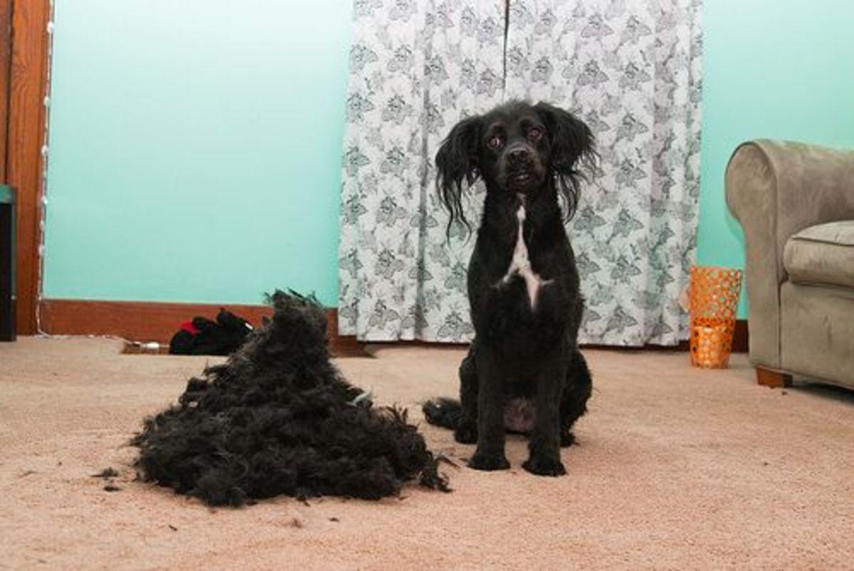 doghair-ccflcr-brownpolyester