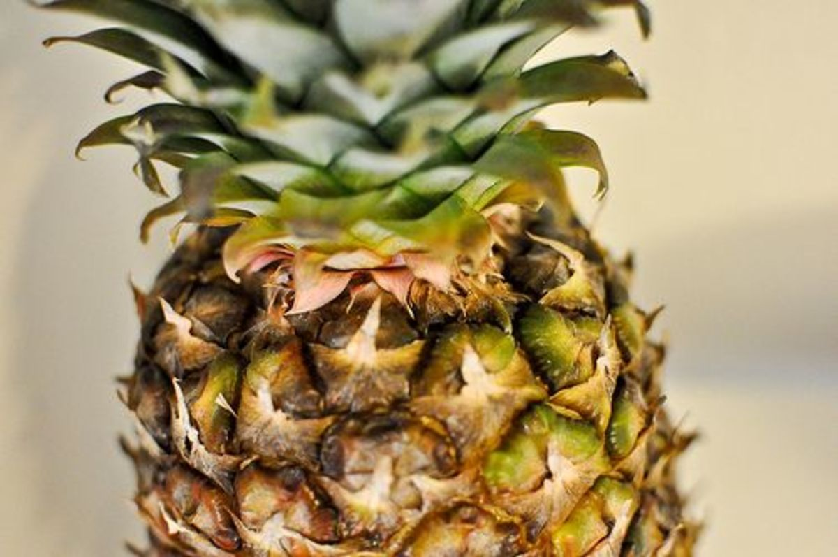 pineapple-ccflcr-courtney-80