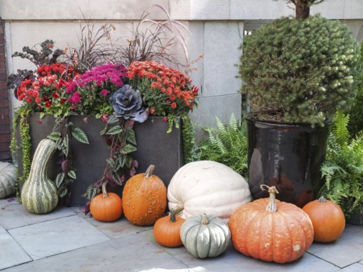 How to Create Fall Container Gardens That Wows Neighbors