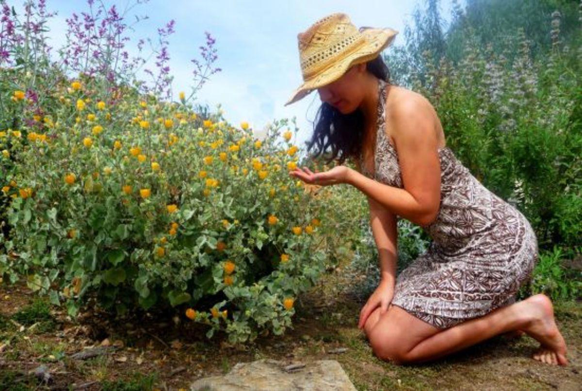 gardener-ccflcr-mechanoid_dolly