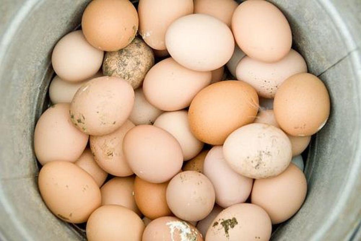 eggs-ccflr-ladeda