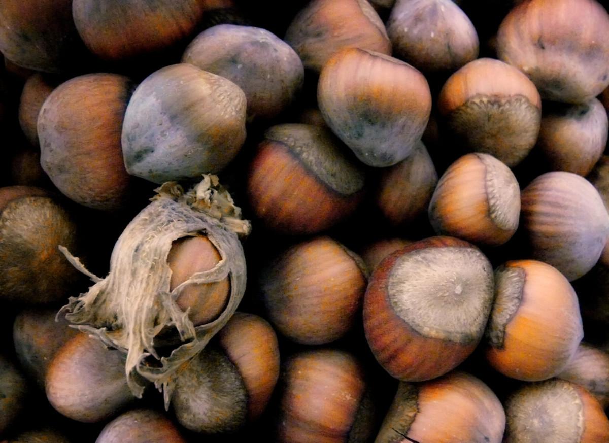 Nondairy Vegan Hazelnut Milk Recipe with Dates and Cinnamon
