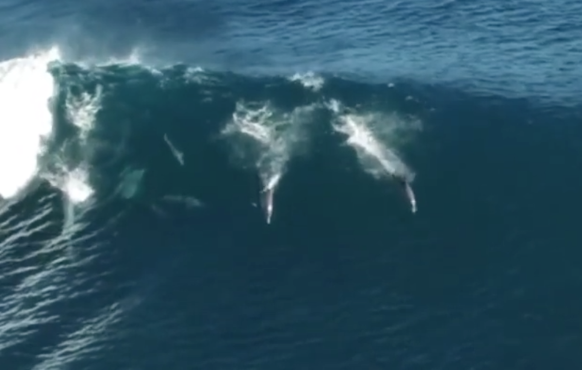At Least these Dolphins are Happy [Video]