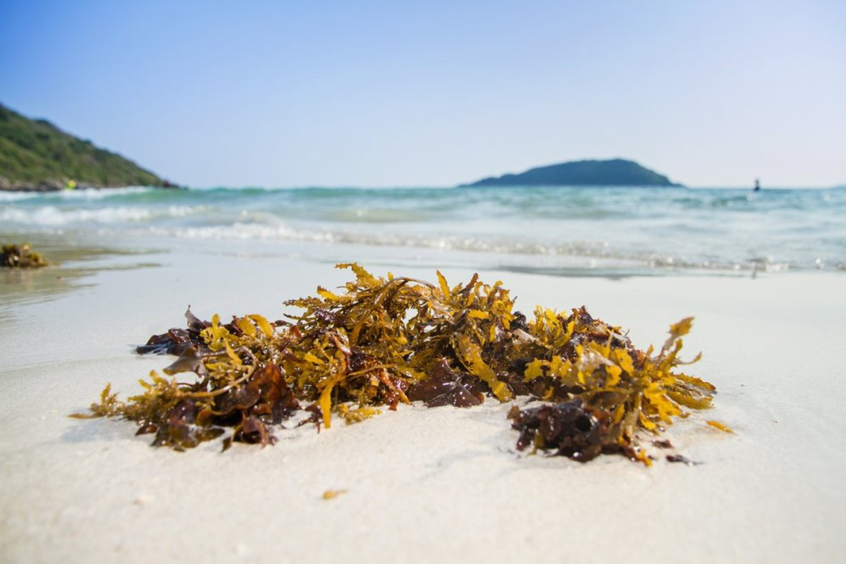 benefits of seaweed to your garden