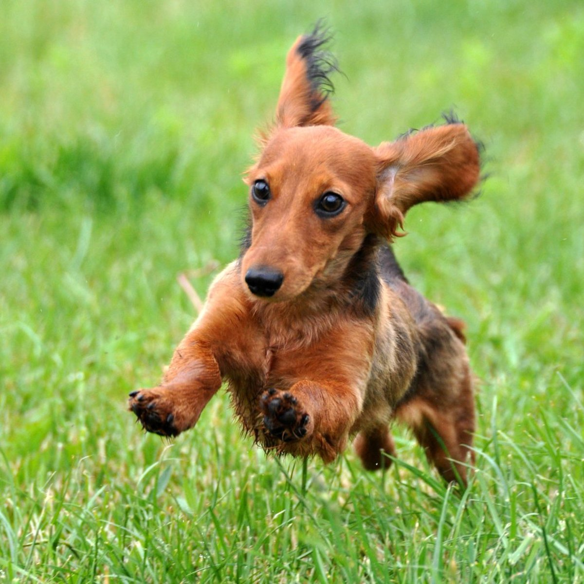5 Daily Exercises You Can Do With Your Pooch