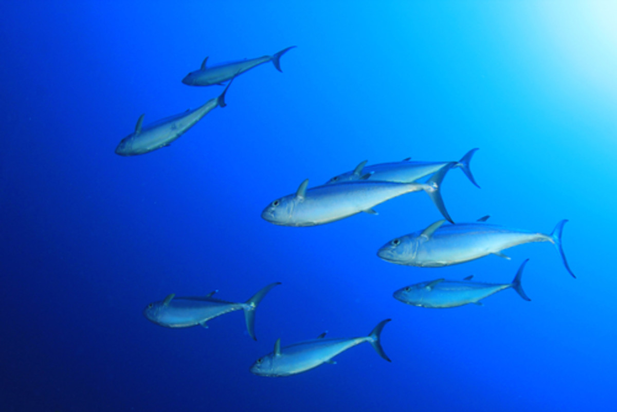 Mercury Levels in Fish on the Rise, Study Finds