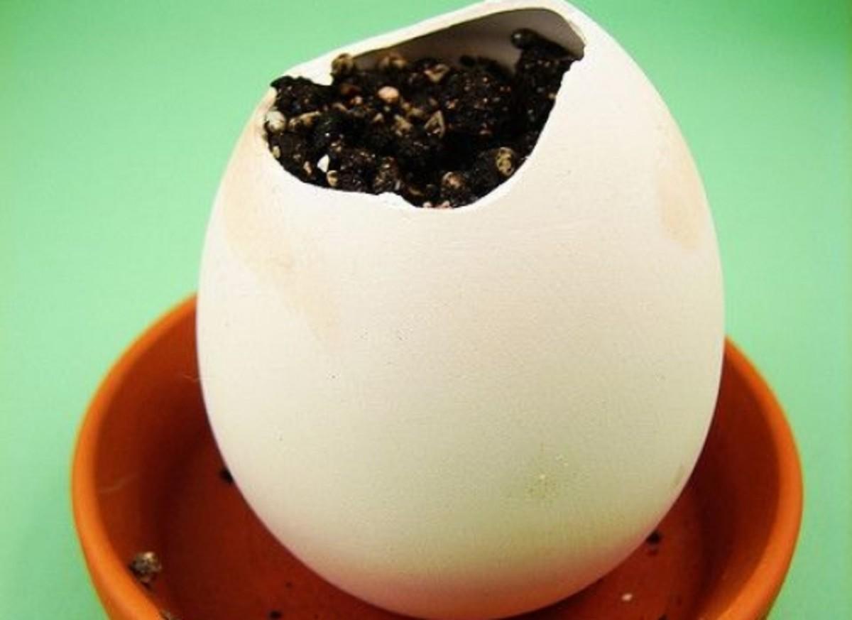 eggshell-ccflcr-visualpanic
