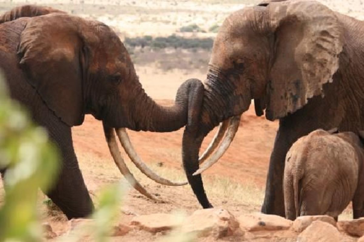 happyelephants