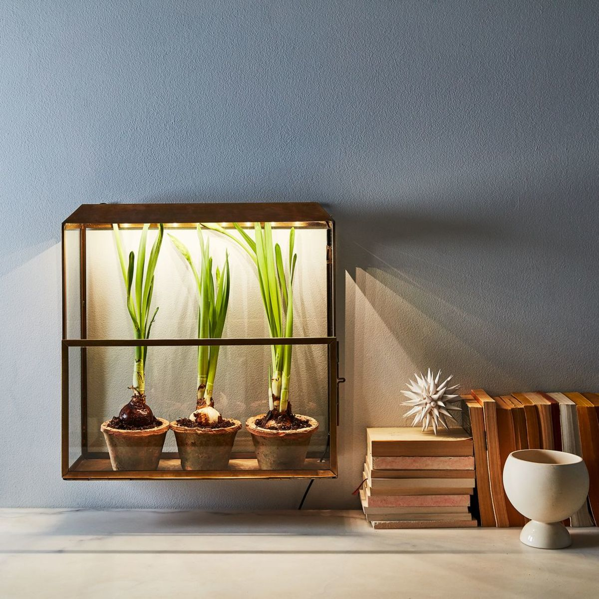 conscious foodie - grow box