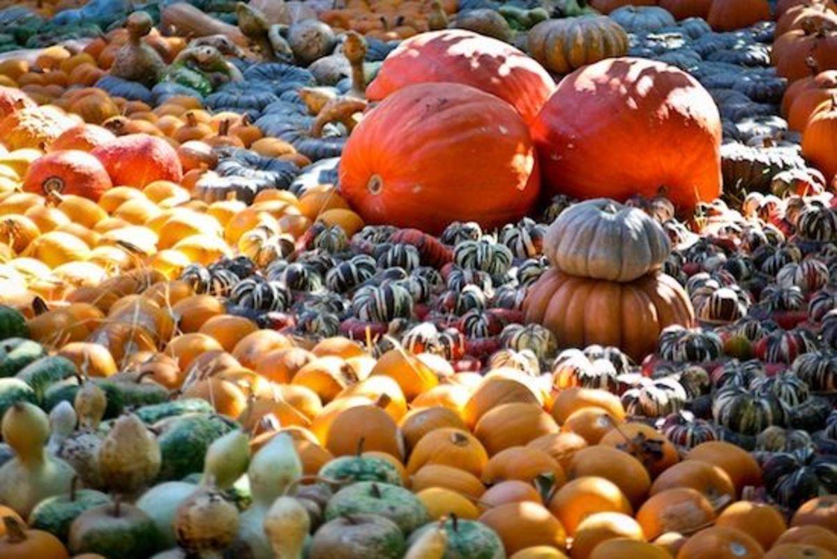 squash-harvest-ccflcr-adrian-valenzuela