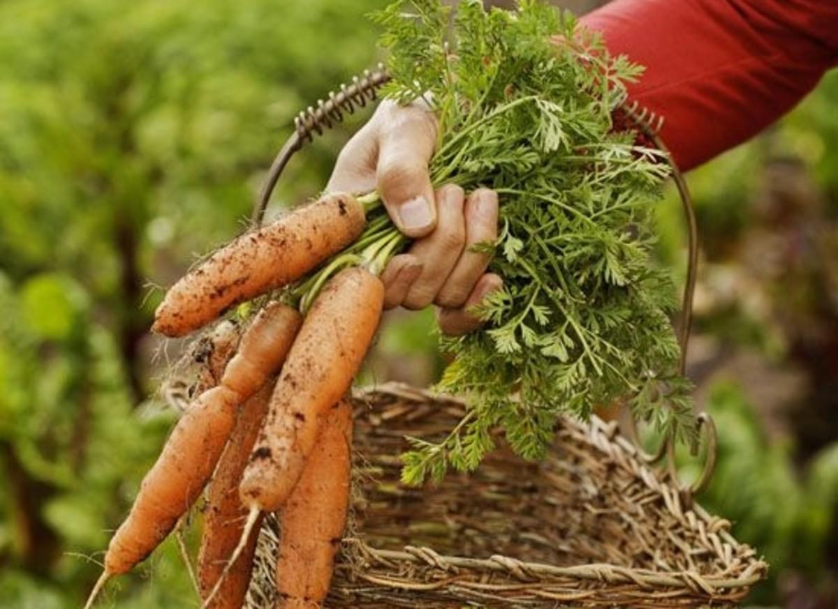 carrots-cerier-cerier