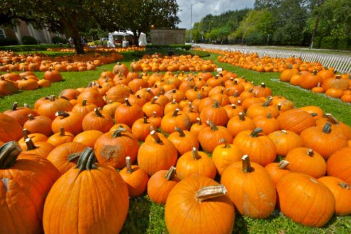 pumpkinsfof