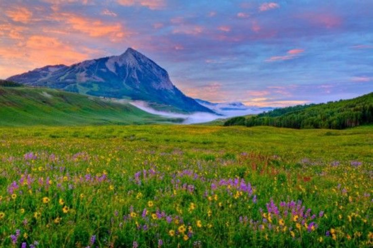 c4149f57f Get Your Wildflower On At Crested Butte s Most Famous Festival ...