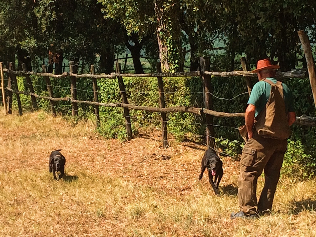 Black Truffle Hunting in Italy
